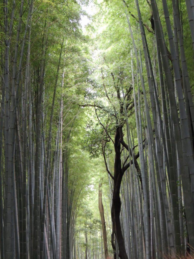 画像に alt 属性が指定されていません。ファイル名: 森林-768x1024.jpg